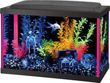 Aqueon Neoglow Aquarium Kit- rectangle 5.5 or ten gallon