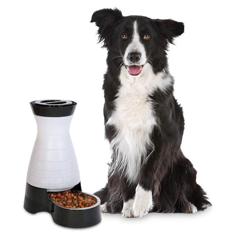 Image of PetSafe Healthy Pet Gravity Dog and Cat Food Station Stainless Steel Bowl Holds Dry Dog or Cat Food
