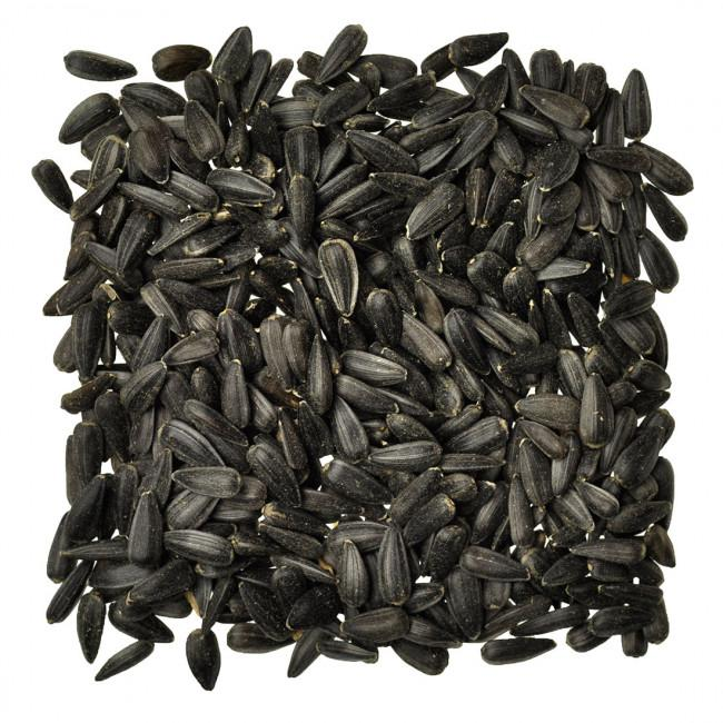 Wingz Avian Products Black Oil Sunflower Seed