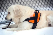 Nylon Harness For Extra Extra Small To Extra Large Dogs Orange With Reflective Trim