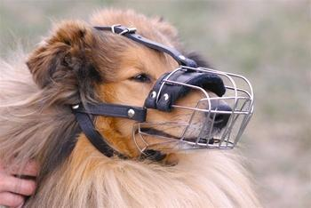 Basket Muzzle With Leather Straps (30 Sizes Available)