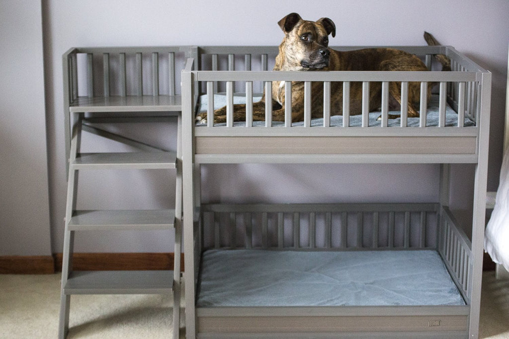New Age Pet® Aspen Bunk Beds for Dogs