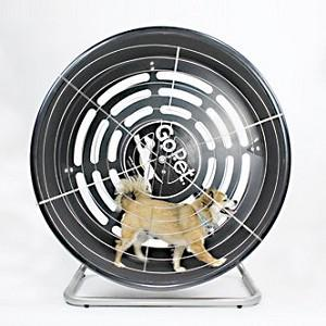 Exercise Wheel For Dogs And Cats Of Small Breeds  under 25lbs- GoPet Treadwheel CG4012
