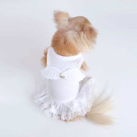 Lil' Angel Luxurious Lace & Cotton Dog Dress