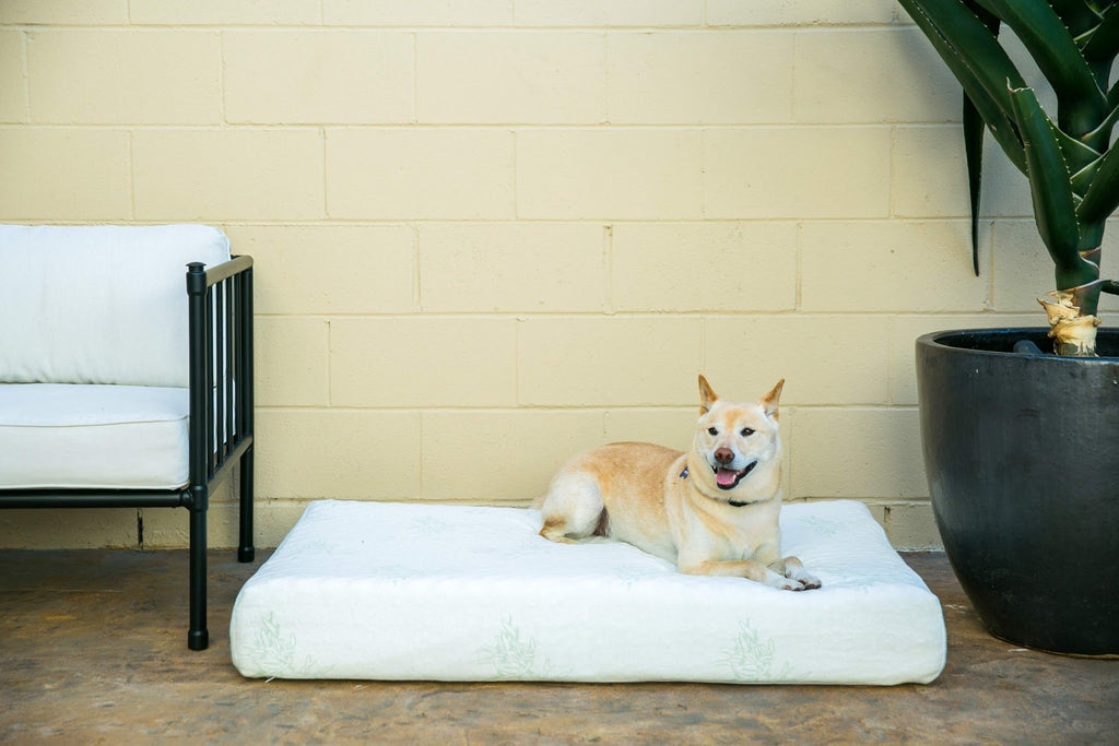 Petique Bamboo Orthopedic Memory Foam Pet Bed WITH HEMP COVER