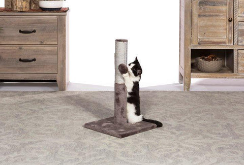 Prevue Pet Kitty Power Paws Play & Scratch