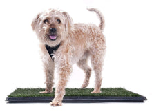 Prevue Hendryx Pet Products Tinkle Turf System
