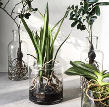 artificial plants in glass vases by hk living