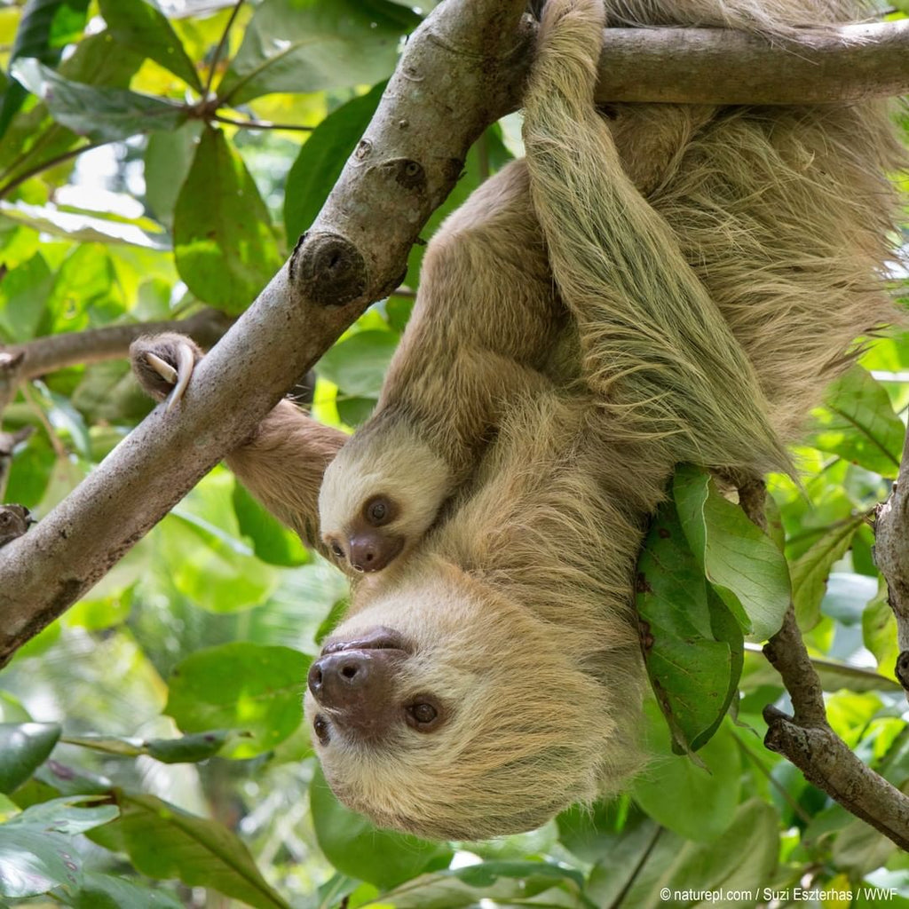 Last Minute Gift Ideas For Your KIN - WWF Donation