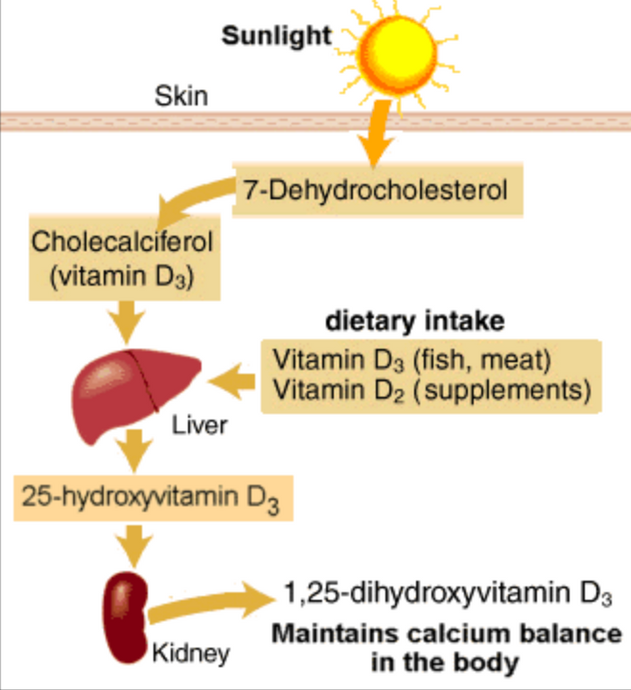Why YOUR VITAMIN D LEVEL should be 60-80? Dr. Russell Jaffe'