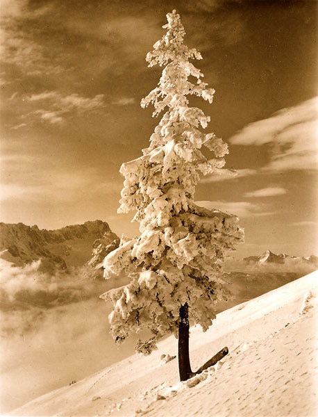 Vintage Ski Photo - The Lone Tree