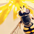 5 Amazing Facts About Bee's