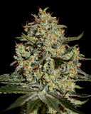 Big Bang Cannabis Seeds