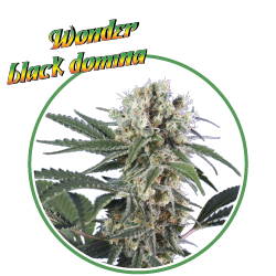 Wonder Black Domina