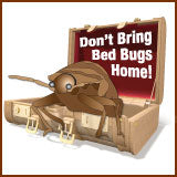 Bed bug travel