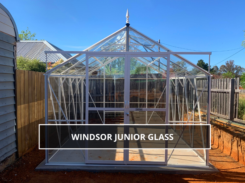 Windsor Junior Glass