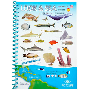 Look & See Caribbean Fish ID Booklet