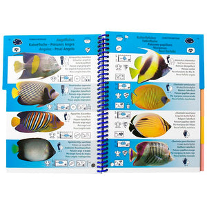 Marine Pictolife Fish ID Guide of the Red Sea Indian Ocean | Inside