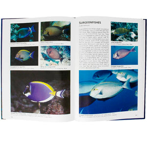 Reef Fishes of The Maldives Inside 2 | Scuba Diving Guide Book