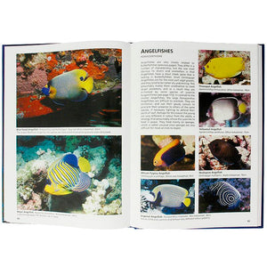 Reef Fishes of The Maldives Inside | Scuba Diving Guide Book