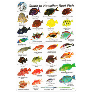 Fish ID Slate Hawaii | Front