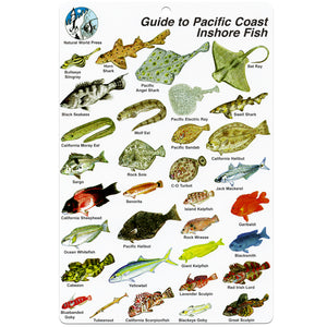 Fish ID Slate Pacific Coast Fishes | Front