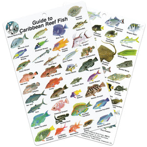 Fish ID Slate for The Caribbean