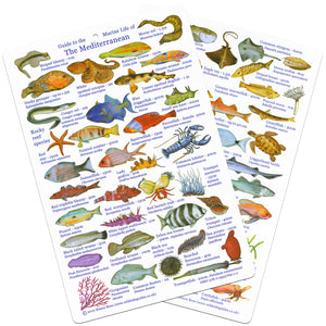 Fish ID Slate dfor Mediterranean Marine Life - UK Shopping