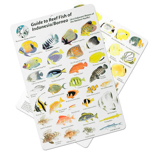 Fish ID Slate for Indoesia and Borneo - UK Shopping
