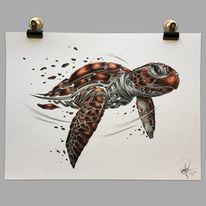 "Fine Art Print ""Seaturtle Slice"""