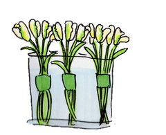A sketch of bundles of white parrot tulips, arranged in a thin vase