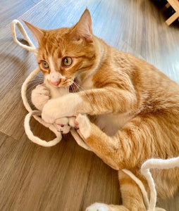 CleoRATra-Handmade Interactive Wool Mouse Cat Toy