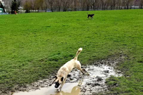 Cathedral Park - Dog Park in Hamilton