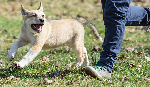 Barrie off- leash dog park article by NutriCanine fresh dog food
