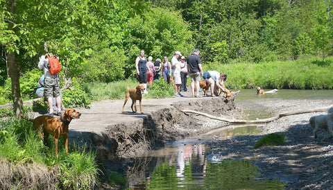 Greenwood Conservation Area dog park in Ajax list by NutriCanine raw dog food