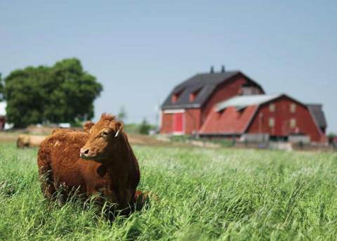 Farm in Guelph that provides raw dog food in Ontario. Rated the best fresh dog food in Toronto