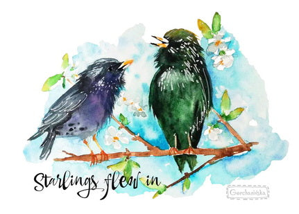 birds postcard, spring birds postcard, postcard starlings, birds in spring postcard