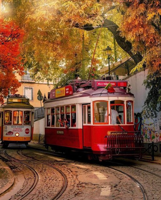 red tram postcard, red tram card