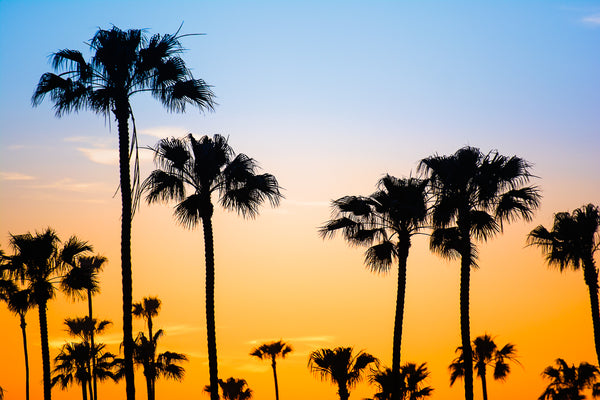 Palm Dusk - John Manzoni Photo