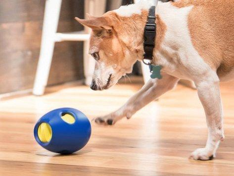 SBARK tikr - a snack activity toy for dogs