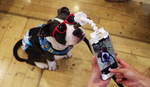 FLEXY PAW, Selfies & Portraits of your Dogs and Cats