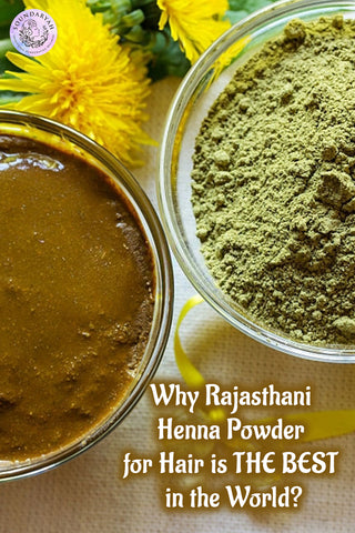 We have spoken a lot about henna in our blogs but did you know that Rajasthani Henna is considered to be the best for hair in the world?