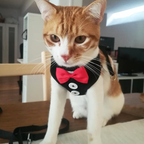Elegent Bowtie Tuxedo with Leash - KittyCatPurrfect