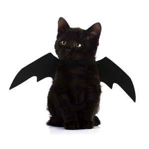 Black Wings for your Kitty Cat - KittyCatPurrfect