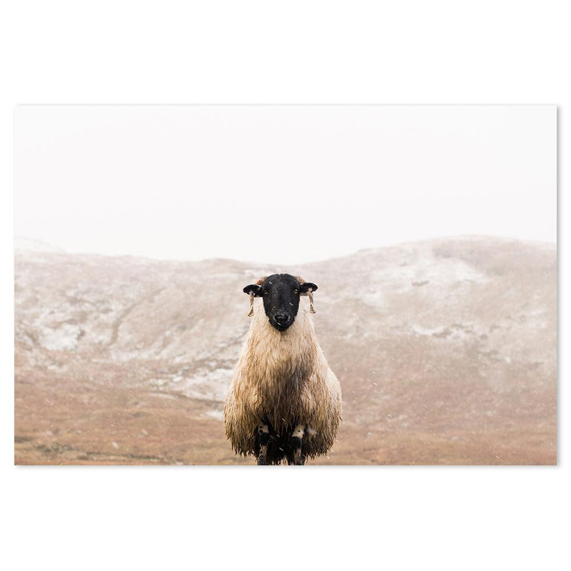 Wall-Art-Poster-Canvas-Framed-A sheep in the mountains-Gioia Wall Art