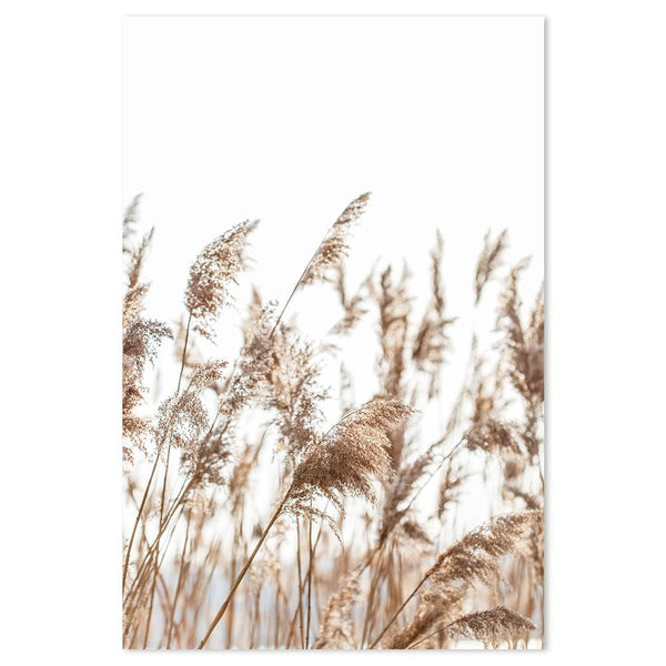 Wall-Art-Poster-Canvas-Framed-Beach pampas grass-Gioia Wall Art