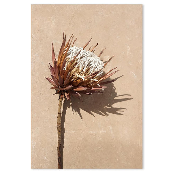 Wall-Art-Poster-Canvas-Framed-Dried Protea-Gioia Wall Art