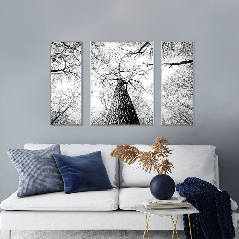Wall-Art-Poster-Canvas-Framed-Giant Tree Branches, Looking Up-Gioia Wall Art