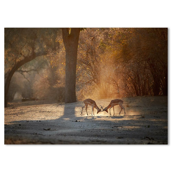 Wall-Art-Poster-Canvas-Framed-Pair Of Gazelles-Gioia Wall Art