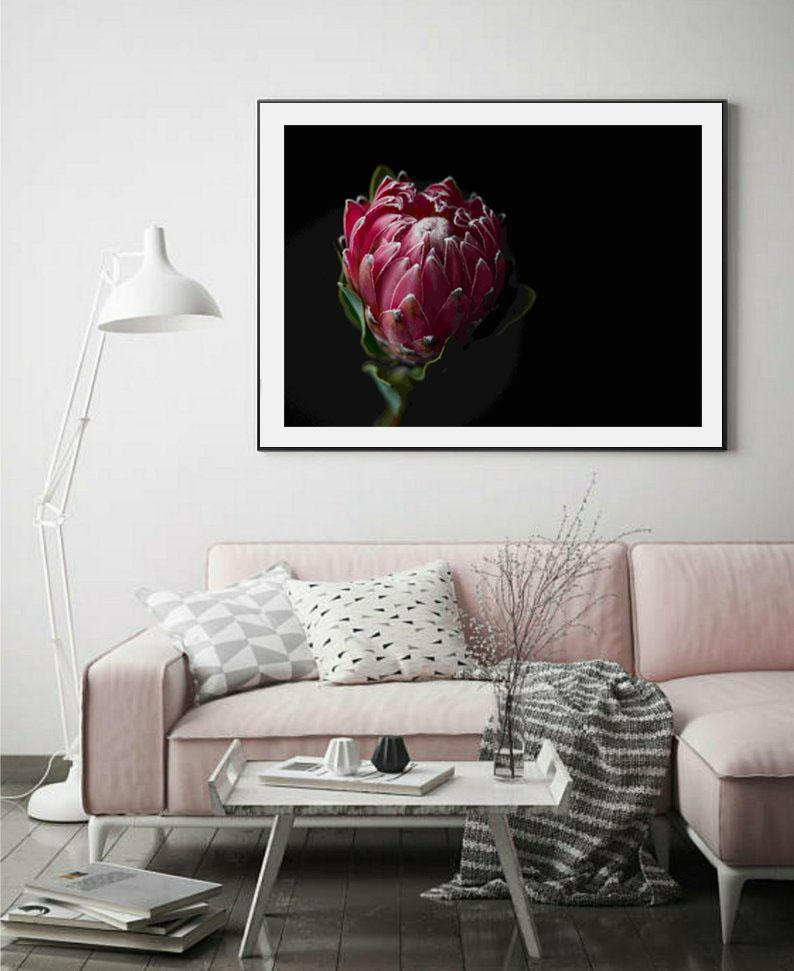 Wall-Art-Poster-Canvas-Framed-Pink Queen Protea-Gioia Wall Art